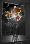 Flowers In The Window - Daffodils - 7959 - Photograph by H. David Stein