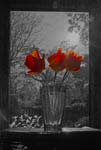 Flowers In The Window - Tulips - 8156 - Photograph by H. David Stein