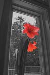 Flowers In The Window - Amaryllis - 9210 - Photograph by H. David Stein
