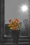 Flowers In The Window - Begonia - 9746 - Photograph by H. David Stein