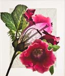 "Gloxinia - Deconstructed - 24"" x 20"" - Photographic Montage by H. David Stein"