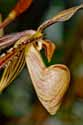 Photograph by H. David Stein - Orchid Homunculus - 1308