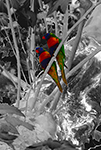 Parrots, Tamarama Park, New South Wales, Australia - Photograph by H. David Stein